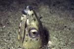 写真:波戸岬海中公園-水中写真 ホタテウミヘビ