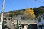写真:呼子-三神社のイチョウ