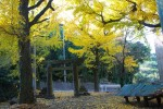 写真:丸田の神社-鎮西町丸田
