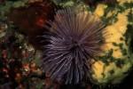 写真:波戸岬海中公園-水中写真 ケヤリムシ