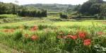 写真:彼岸花の季節