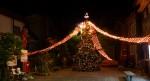 写真:イカすクリスマスツリー