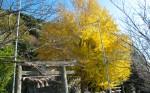 写真:鎮西町神社の秋