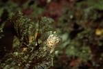 写真:波戸岬海中公園-水中写真 ミズタマウミウシ