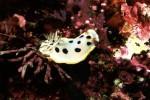 写真:波戸岬海中公園-水中写真 シロウミウシ