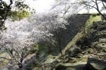 名護屋城 桜の季節